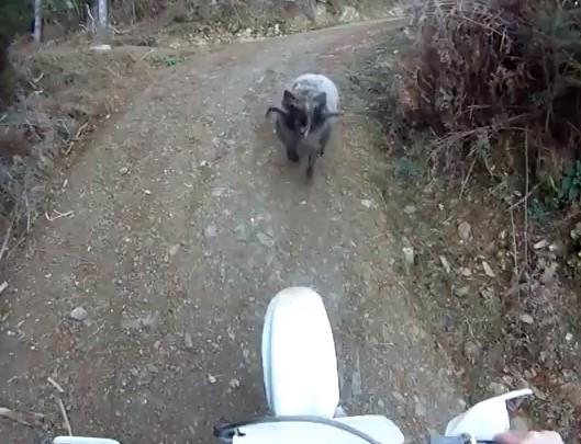 ram vs rider