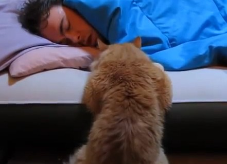 Bubbles the Cat Wants His Sleeping Owner to Wake Up and Play