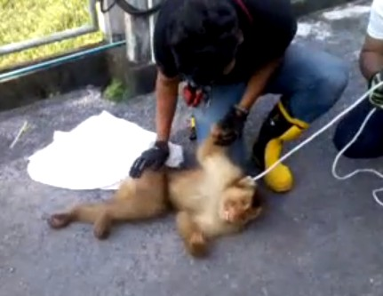 Thai Paramedics Successfully Perform CPR on a Monkey Electrocuted on a Power Line