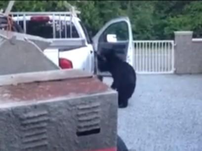 bearjacked