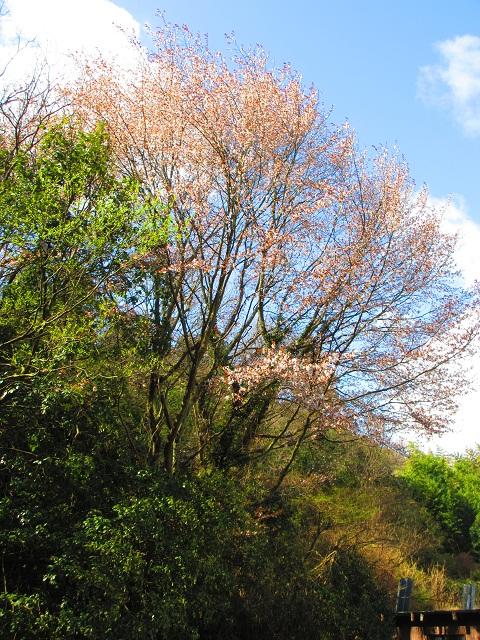 遅咲き姥桜