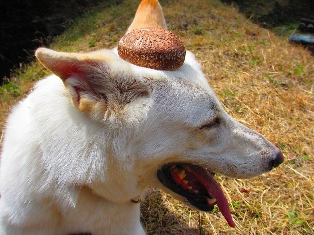 おされ帽子ですか?