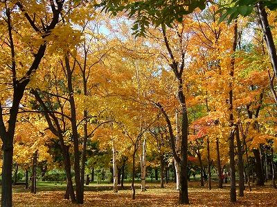 中島公園②