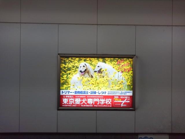 P1008617 (640x480)