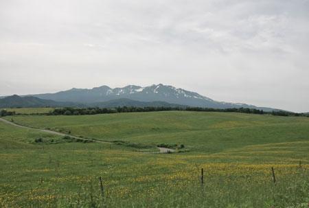 angasu2013-7.jpg