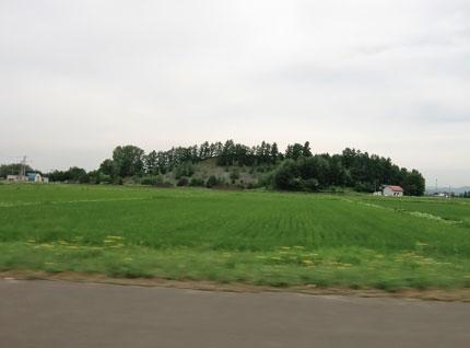 syatekiyama2013-7-mori.jpg