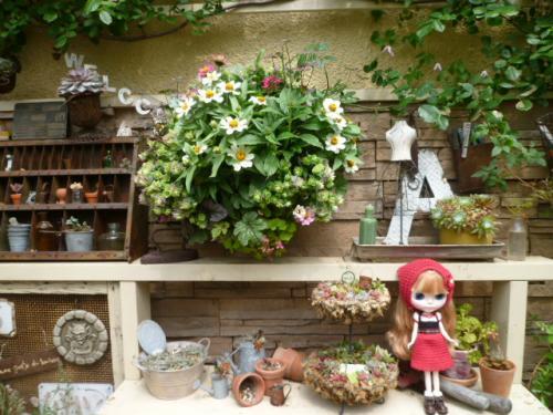 景子さんのお庭♪
