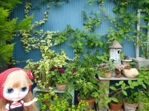 Tさんのお庭♪