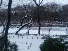 井の頭池(かいぼり中)の積雪2