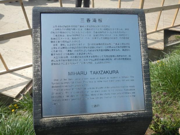 三春滝桜 (3)