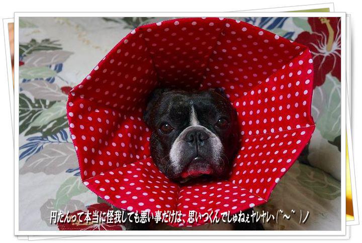 ラスよし円