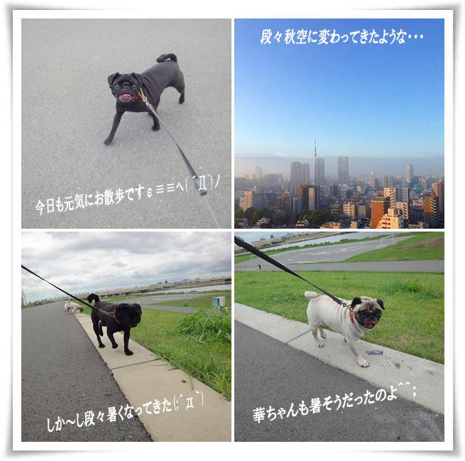 cats_20140927235740e84.jpg