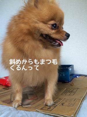 fc2blog_20140918193429a6d.jpg
