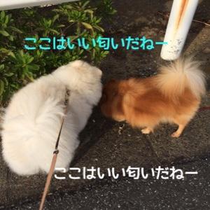 fc2blog_20141012120321308.jpg