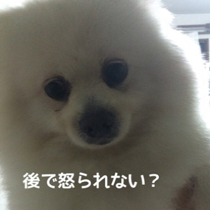fc2blog_2014101619460612c.jpg