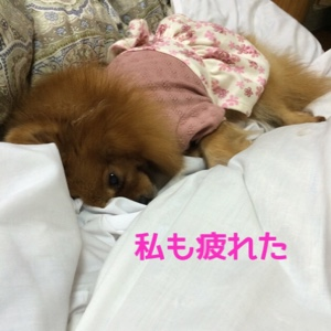 fc2blog_20141022195619235.jpg