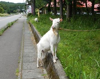 20130614_jogging_gotenba_07.jpg