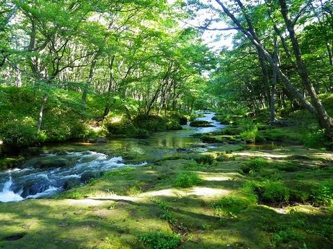 湯川ハイキング2013804 (10)