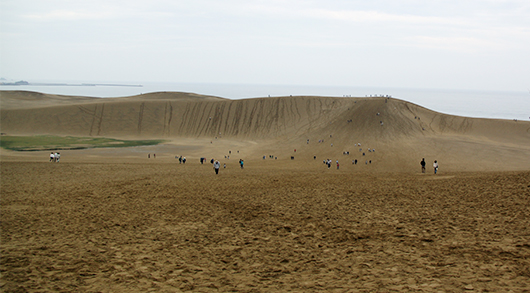 これが砂丘だ!