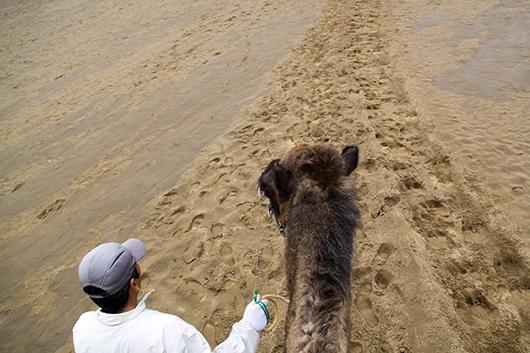 ラクダに乗ってラクダを撮る