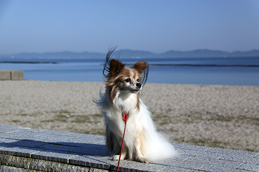海辺をお散歩