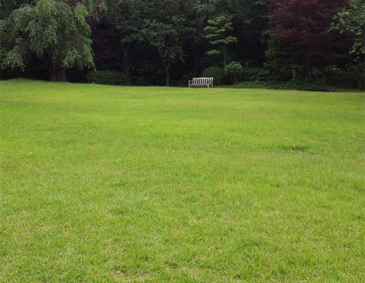 走れ!と言わんばかりの芝生