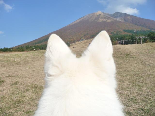 大山の紅葉!今年は11月7日に来てちょっと遅かったなぁ!の★リサ★のお耳