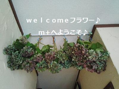 一目ぼれの紫陽花