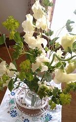 春のお花.