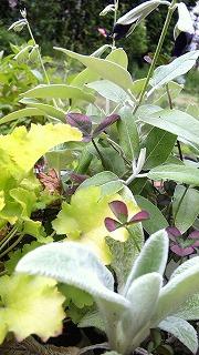 GREENの寄せ植え1