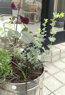 2013秋の寄せ植え