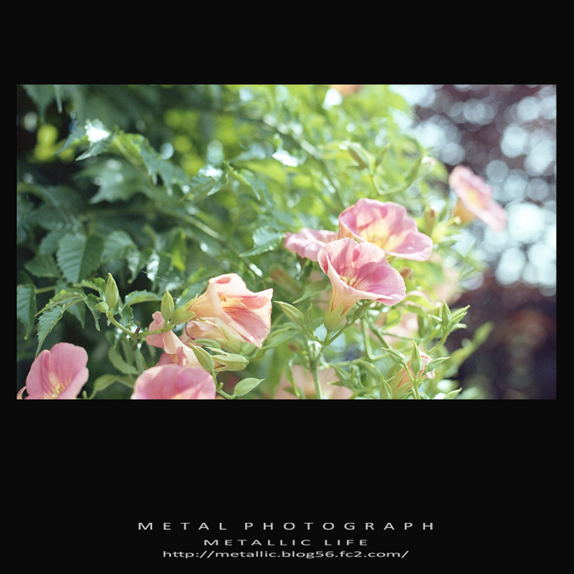 mlf8020130718-4