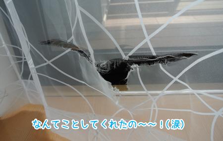 20130321_02.jpg