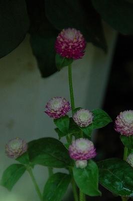 niwaDSC_4619.jpg