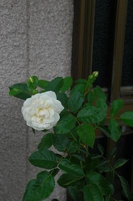 niwaDSC_4666.jpg