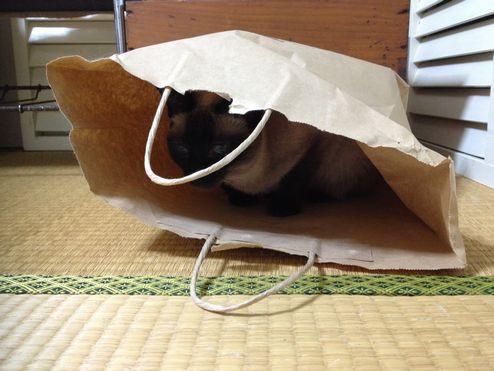 あずき袋w