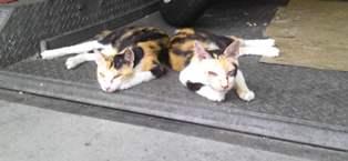 ママと姉20120805