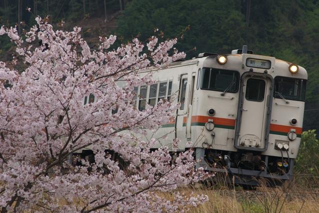 130402-JR-T-DC40-sakura.jpg
