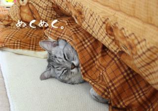 ネコになりたい・・。
