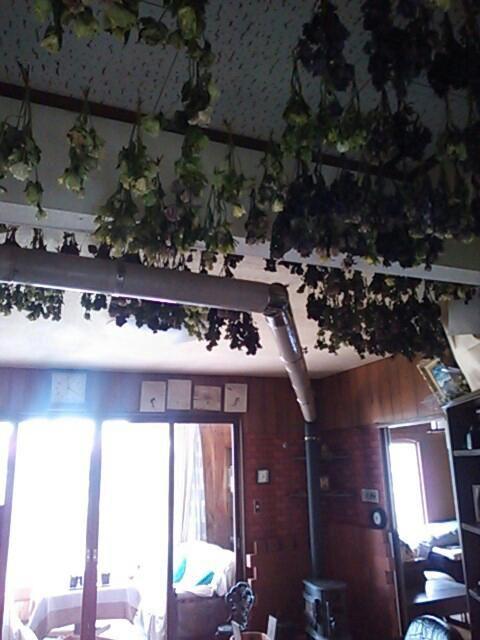 天井のドライ2013