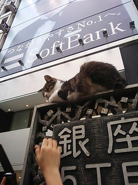 銀座のネコ