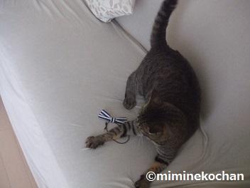 mimia 084