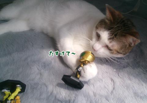 130701_猫科仲間01