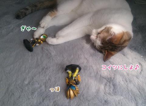 130701_猫科仲間02