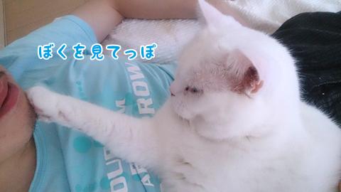 130804_甘えん坊メメタ04