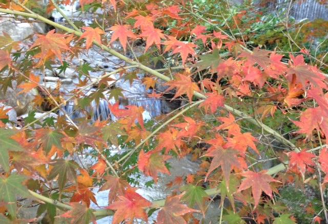 昭和の森2