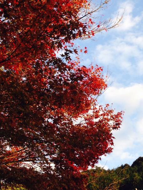 昭和の森4