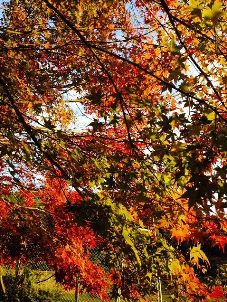 昭和の森6