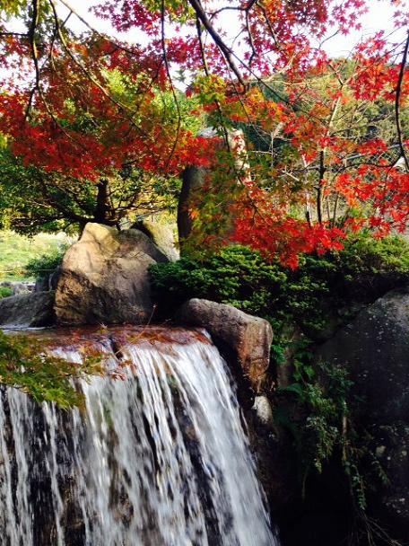 昭和の森8