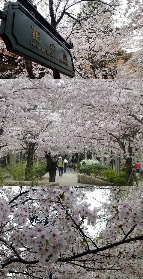 13.3.31宝塚の桜